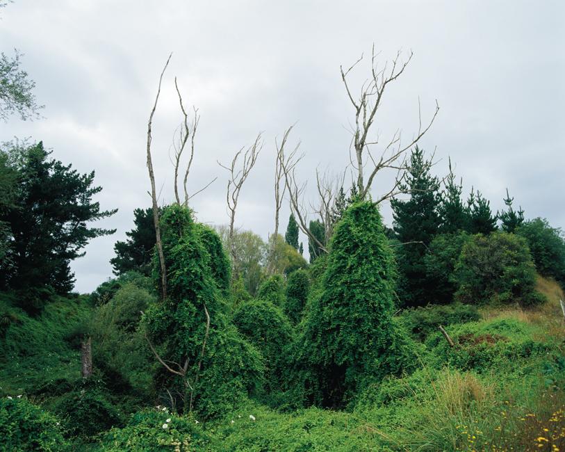 Foliage-in-fœtu #2, 2010