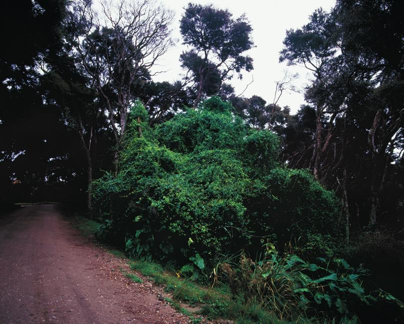 Foliage-in-fœtu #5, 2011