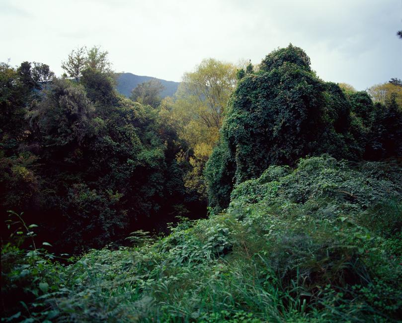 Gorilla Foliage, 2010